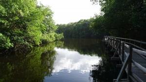 marie galante chemin mangrove